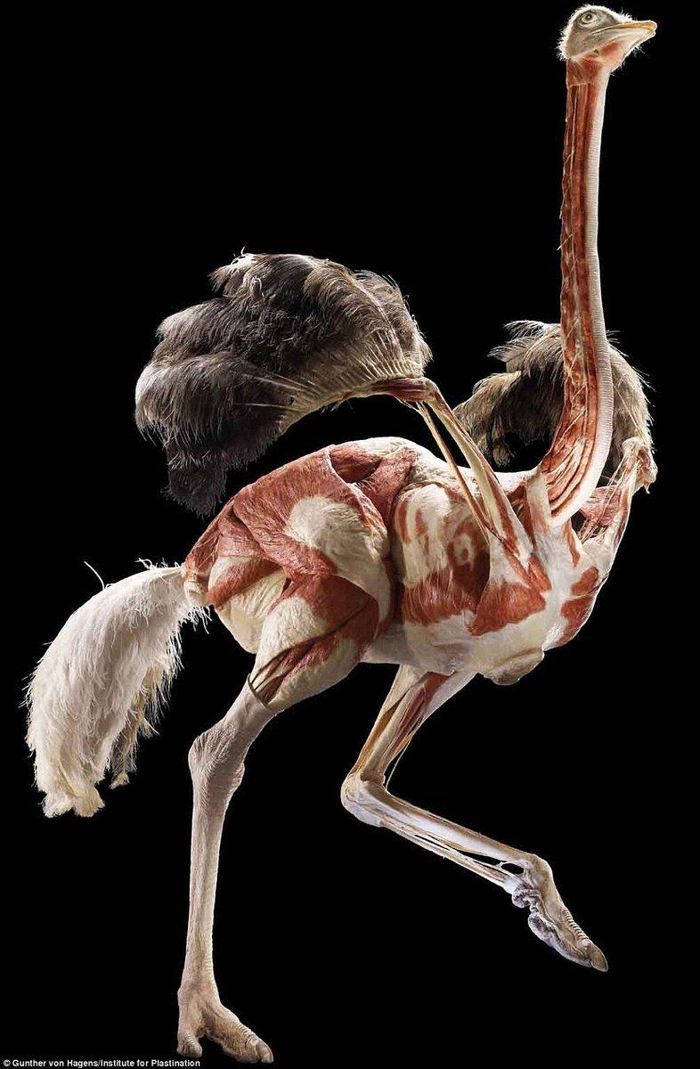 """""""死亡解剖"""":栩栩如生的""""塑化""""尸体"""