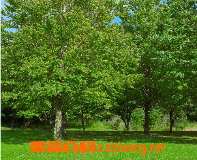 果蔬百科树木